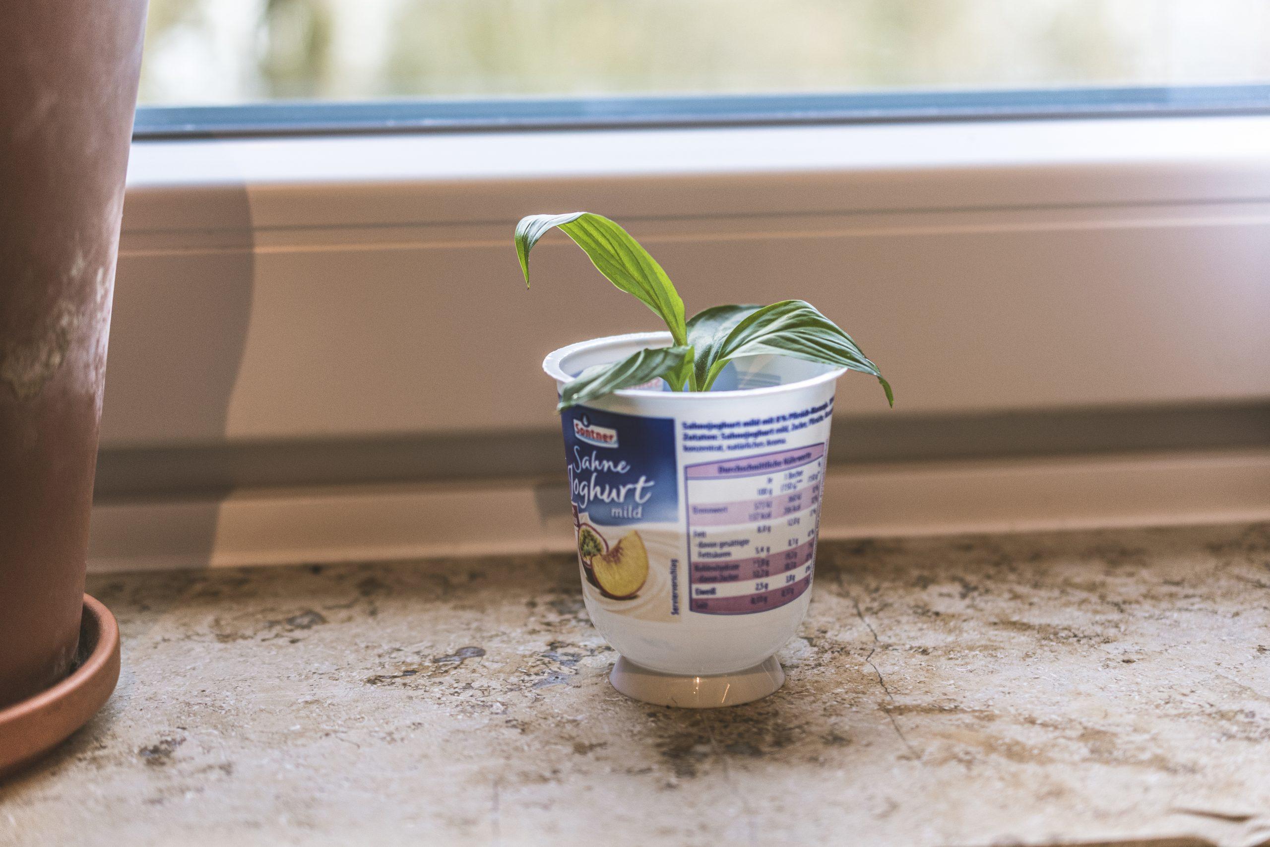 Haltbarkeitsdatum von Lebensmitteln wie Joghurt